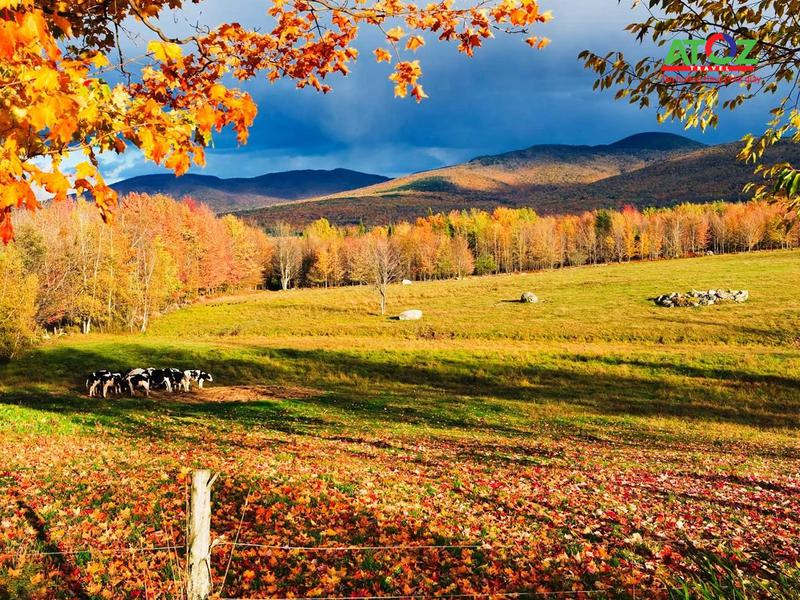 Đến Canada vào mùa thu thì không nên bỏ qua những lễ hội đặc sắc này