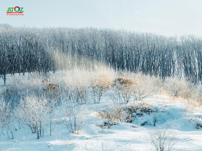 """Chiêm ngưỡng vẻ đẹp huyền ảo """"bụi kim cương"""" ở nơi lạnh giá nhất Nhật Bản"""