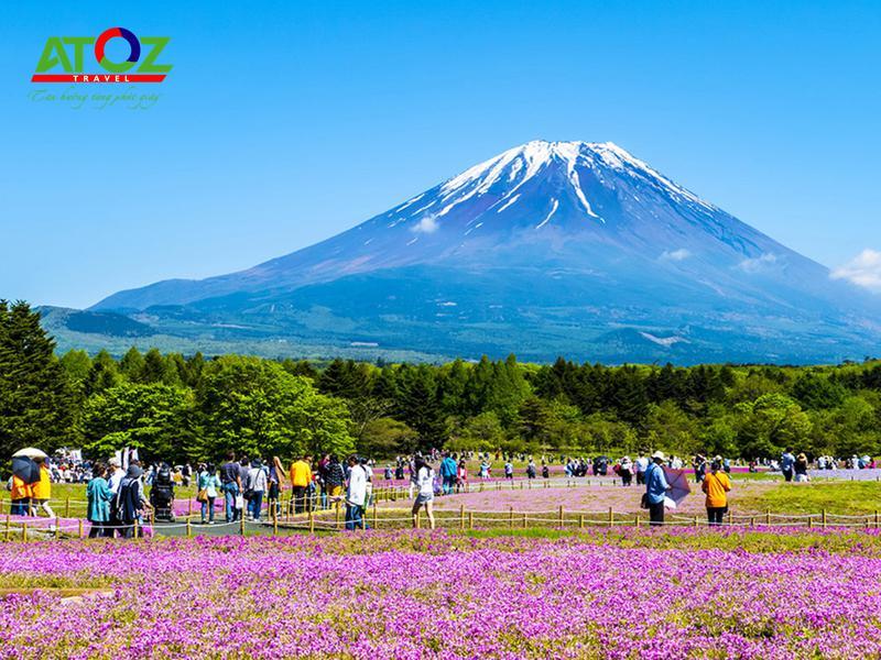 Tour Nhật Bản lễ 30/4/2020: Cung Đường Vàng Hoa Tử Đằng – Lễ Hội Hoa Chi Anh