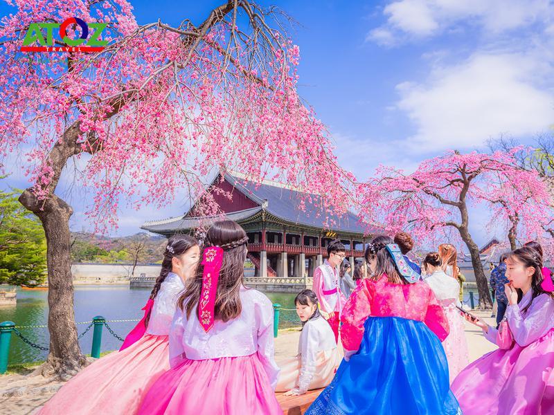 Tour Hàn Quốc mùa hoa anh đào: Seoul - Đảo Nami - Everland - Tháp Nam San