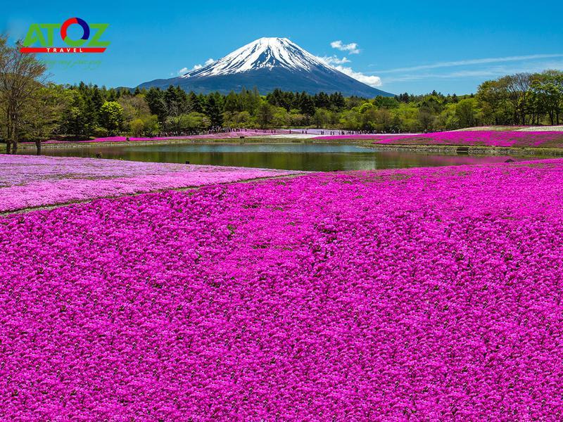 Tour Nhật Bản lễ 30/4/2020: Cung Đường Vàng Hoa Tử Đằng – Lễ Hội Hoa Chi Anh (VJ)