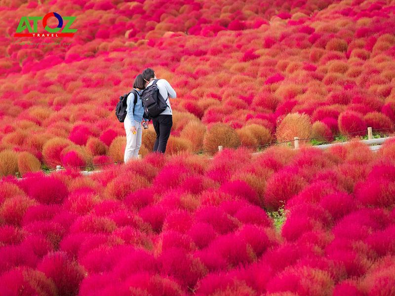Tour Nhật Bản cung đường vàng mùa thu: Tokyo – Ibaraki – Yamanashi – Hamamatsu – Kyoto – Osaka – Kobe